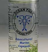oceanpods